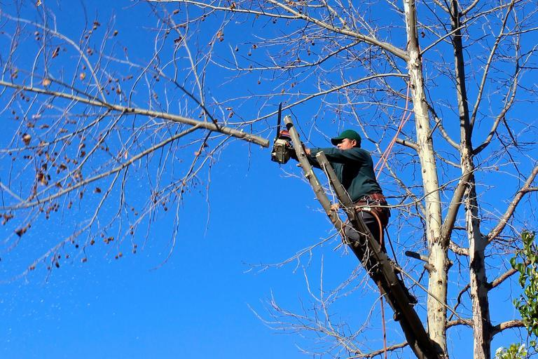 The benefits of hiring tree services for your garden and green space